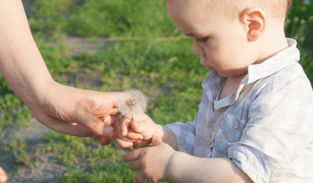 child observing a dandelion